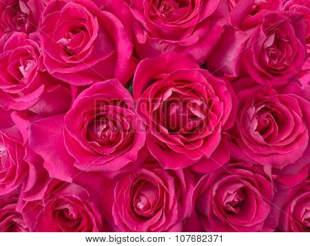 Deep Pink Roses Bouquet Background