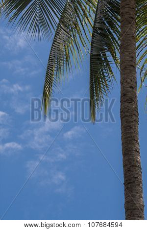 The Upper Part Of The Palm Trees Background The Blue Sky.