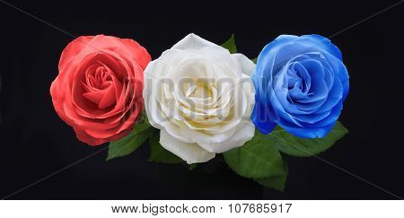 Symbolic Red White and Blue Roses