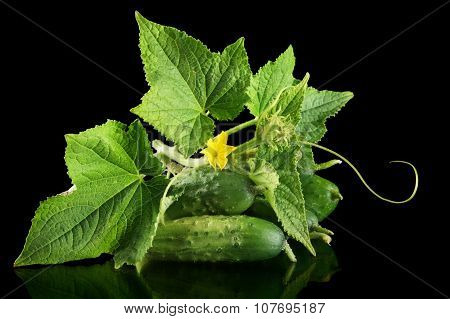 Few Fresh Raw Gherkins With Flower Isolated On Black