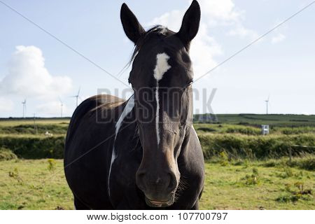 Horse In A Field Near To Windmills