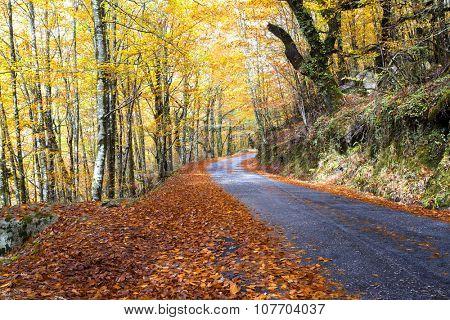 Autumn landscape at Geres National Park, Portugal