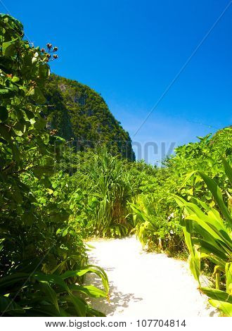Paradise Scene Hiking Path