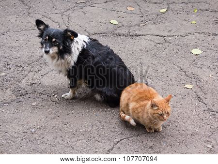 Homeless Comrades, Cat And Dog