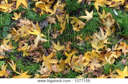 Autumn Ground (Seamless)