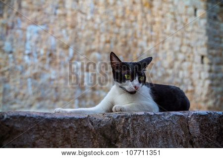 Cat Lies In Front Of The Stone Wall.