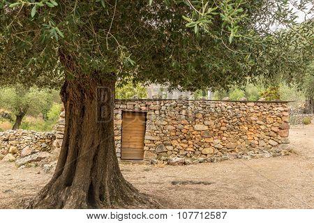 Village And Stone Buildings At Tuvarelli In Corsica