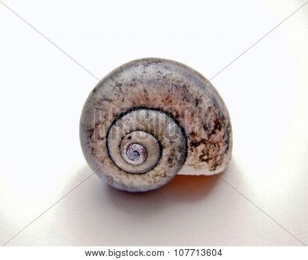 Fossil Sea Shell
