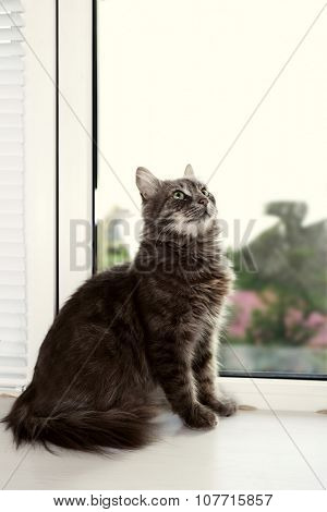 Beautiful grey cat on window board, close up