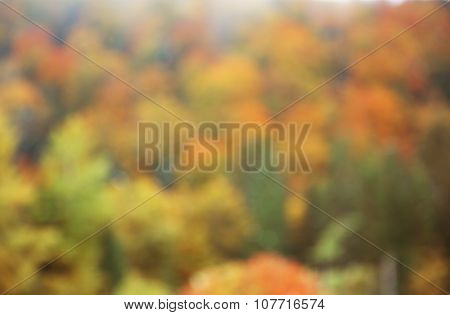 Blurred photo of Autumn mountain forest