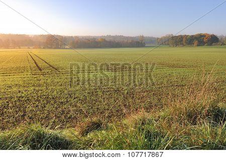 Green Seedling In Sun
