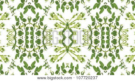 Geometric Floral Decorative Frame Seamless Pattern