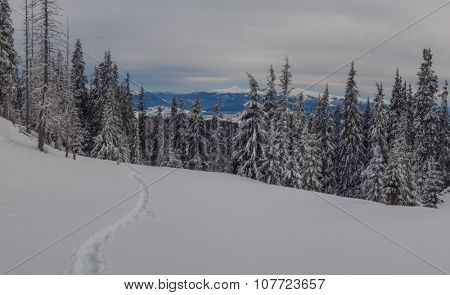 Fantastic winter landscape with snowy trees. Carpathians, Ukraine, Europe.