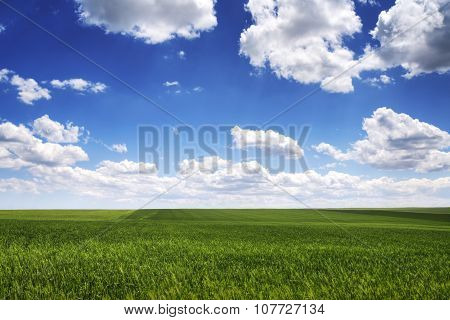 Meadow With Green Wheat Grass And Blue Sky With Clouds