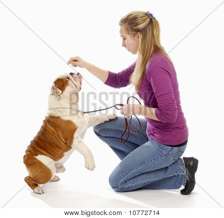 Teaching A Dog To Sit Pretty