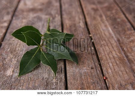 Fresh twig with bay leaves, on vintage wooden table