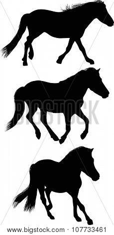 illustration with three horses isolated on white background
