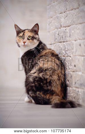 Multi-colored Cat Near A Brick Wall.