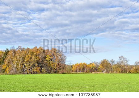 Trees And Fields In Autumn