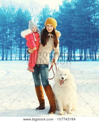 Family In Winter Park, Happy Mother And Child Walking With White Samoyed Dog