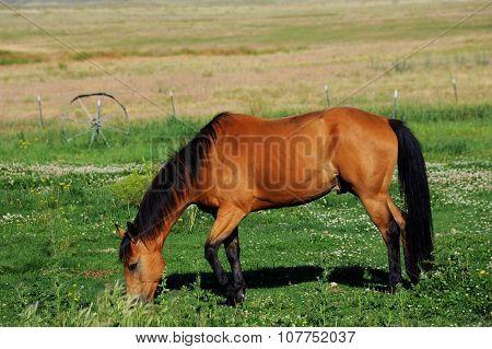 Pasture Grazing