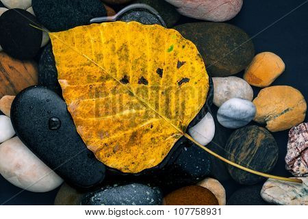 The Yellow Bodhi  Leaves Falling On River Stone Zen , Peaceful, Meditation Concepts .