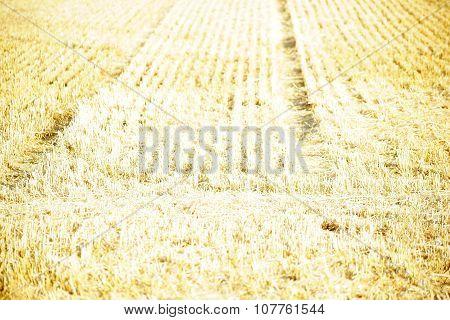 Field in the sunlight