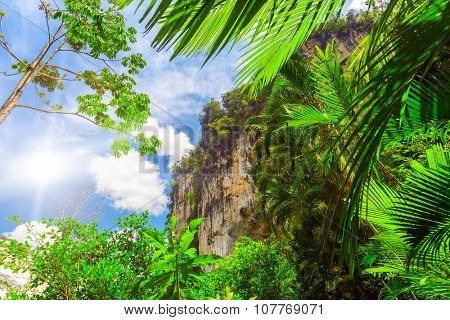 green palm leaves close up and big rock in Thailand