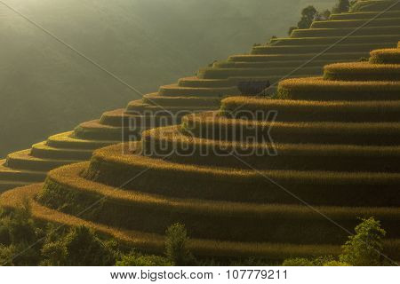 Beautiful Rice Terraces South East Asia