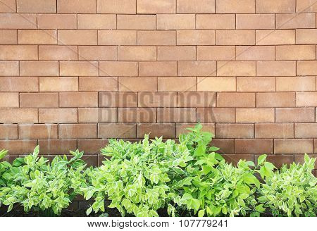 Brown Brick Wall Foully And Green Leaf.