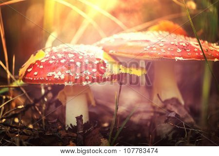 mushrooms in fall season