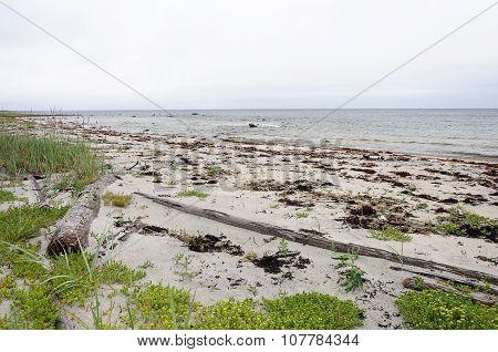 North Seascape, White Sea