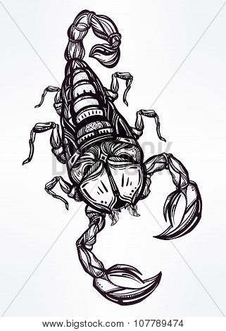 Hand drawn Scorpion, symbol of Scorpio.
