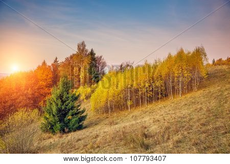 Majestic tree with sunny beams at mountain valley. Dramatic morning scene. Red and yellow leaves. Retro filter and vintage style. Instagram toning effect. Carpathians, Ukraine, Europe. Beauty world.