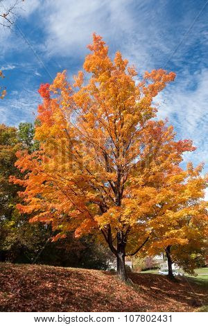 bright sunlit foliage