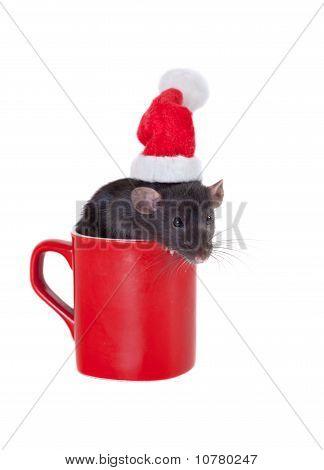 Rat Santa Claus