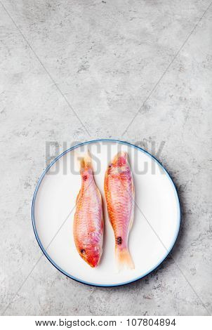 Raw fish, Red mullet fish on a white plate