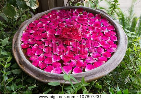 Red Rose Petal Floating Water In Bowl Basin