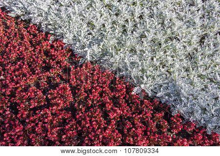 Floral Carpet Close-up
