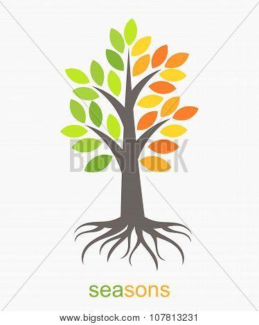 Two Seasons Tree