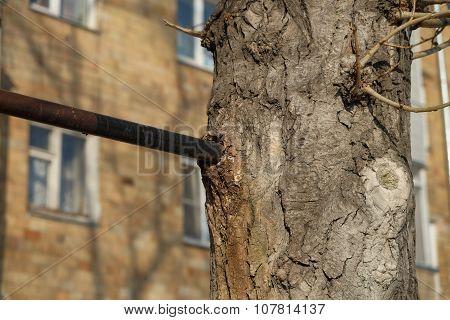 Ingrown metal pipe in the tree bark.