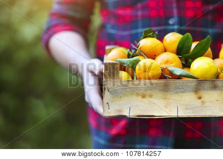 Box Of The Tangerine In The Hands Of A Man In A Plaid Shirt
