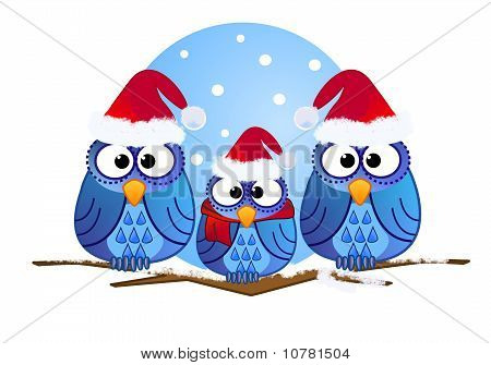 Cute owls with Santa hats