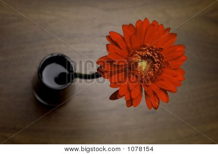 Red Gerbera In Black Vase