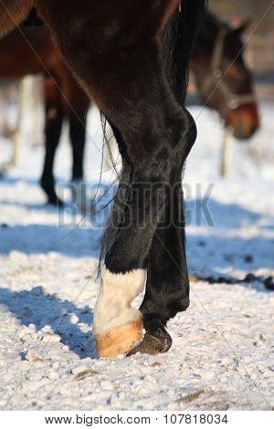 Close Up Of Black Horse Legs