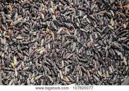Rice Rice Berries