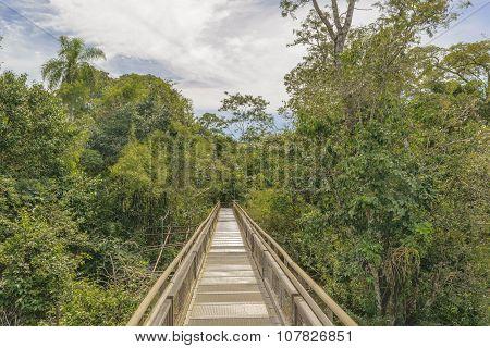 Bridge At Iguazu Park Argentinian Border
