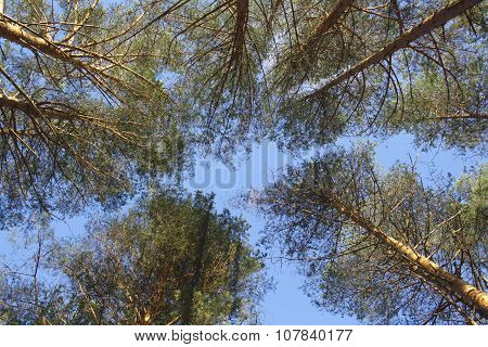 The Sky In The Forest