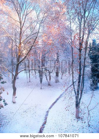 Winter Forest Landscape In Cold Sunny Morning