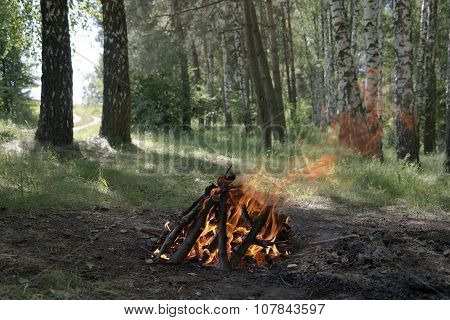 The Fire In The Forest